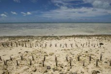 Global Partnership for Oceans är ett globalt initiativ för gemensamma ansträngningar för att skydda världens hav. UN/Photo Eskinder Debebe