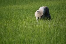I Laos har risbönder börjat odla även andra grödor för att trygga sin försörjning. UN/Photo, Martine Perret.