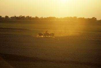Jordbruksinvesteringar idag kan förebygga livsmedelskriser imorgon. UN/Photo, John Isaac.